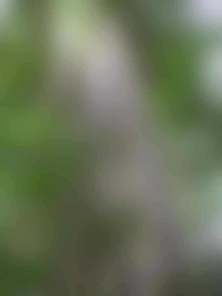 Misteri Alas Purwo, Alas Paling Angker Se-Pulau Jawa