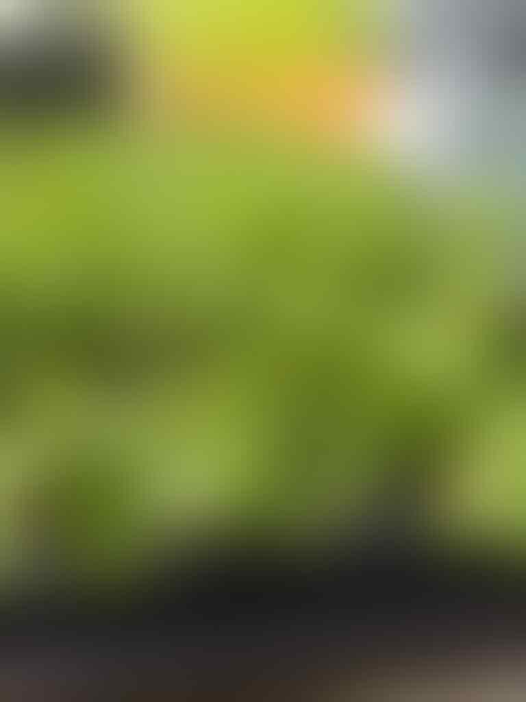 [FR] MINI KOPDAR SF COOKING GOES TO BANYUMAS APRIL 2018