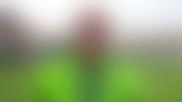 Persib Bandung Mau Digembosi kata Roberto Carlos Mario Gomez