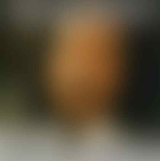 Hanafi: Ucapan Amien Rais Sesuai Al Quran