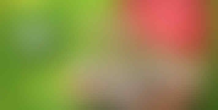 [ FBS BROKER ] BONUS 100% LANGSUNG UNTUK SETIAP DEPOSIT ANDA >>> >>> >>> >>> >>> >>>