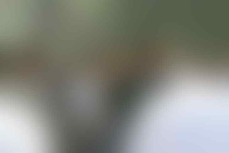 Kerennya Jokowi dengan Jaket Asian Games, Cara Unik Promosikan Event Bergengsi Ini