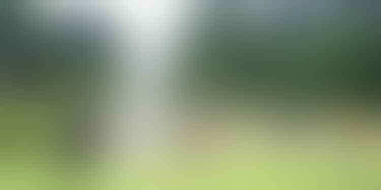 [COC GL] 7 Alasan Keberadaan Taman Sangatlah Penting Bagi Kelestarian Alam