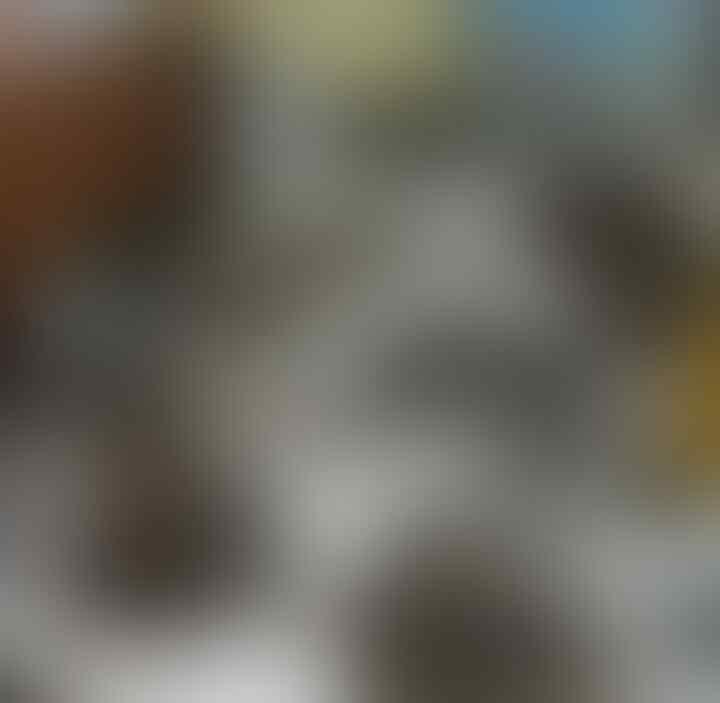 WNA Asal AS Selundupkan 220 Opsetan Satwa Dilindungi di Papua