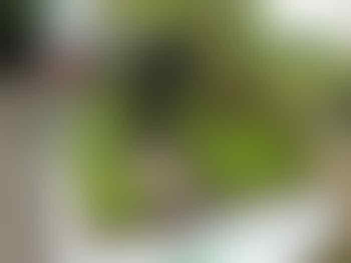 10 Potret Unik Kontes Kei di Jepang, Bikin Taman di Atas Truk!
