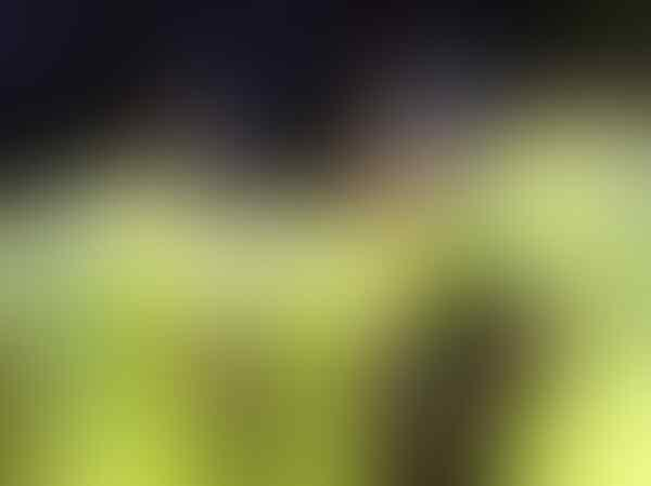 Usai Kolombia Kalah, Maradona Buat Pernyataan Kontroversial