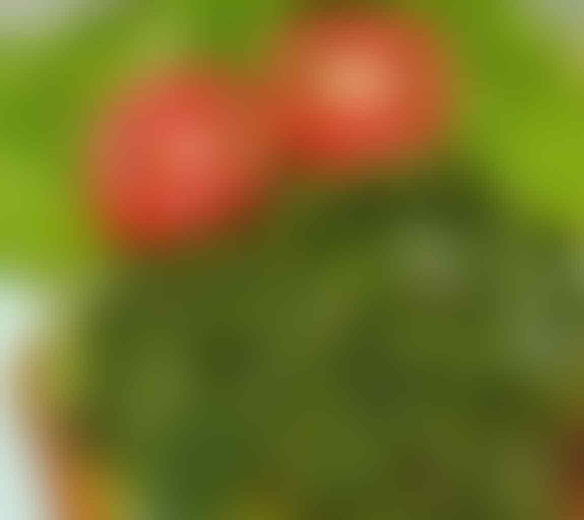 Dicari Partner/Investor Untuk Pengembangan Bisnis Kuliner Olahan Ayam
