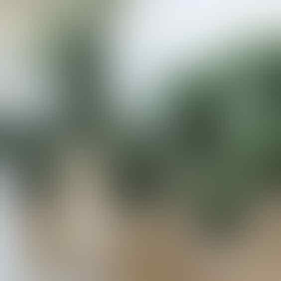 5 Jenis Kaktus Mini Ini Bikin Meja Kerjamu Makin Kece