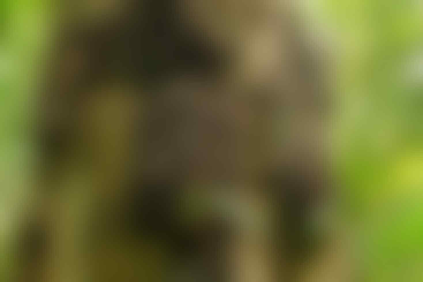 Merinding, Ini 7 Fakta Kuburan Bayi di Tana Toraja yang Jadi Wisata!