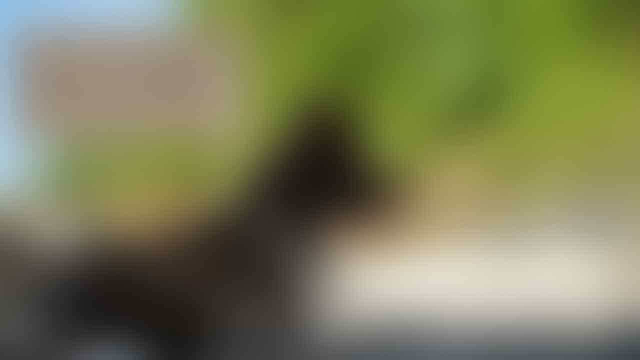 Kisah Inspiratif: Debby Handoko, Sang Penyelamat Anjing Liar