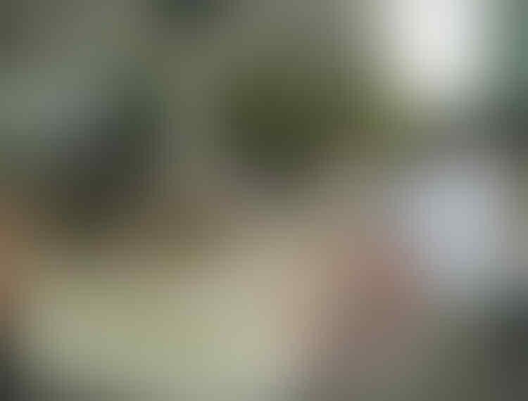 Jokowi Jadi Presiden Pertama yang Disambut di Istana Changdeok