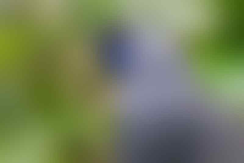 12 Jenis Burung Cantik Berikut Telah Dinyatakan Punah Dekade Ini