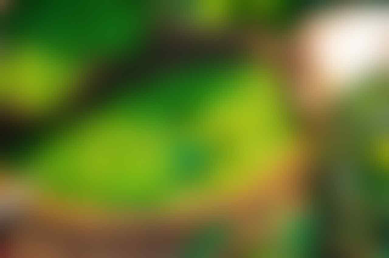 Mudah Banget, Ini 10 Cara Efektif Hilangkan Komedo dengan Bahan Alami