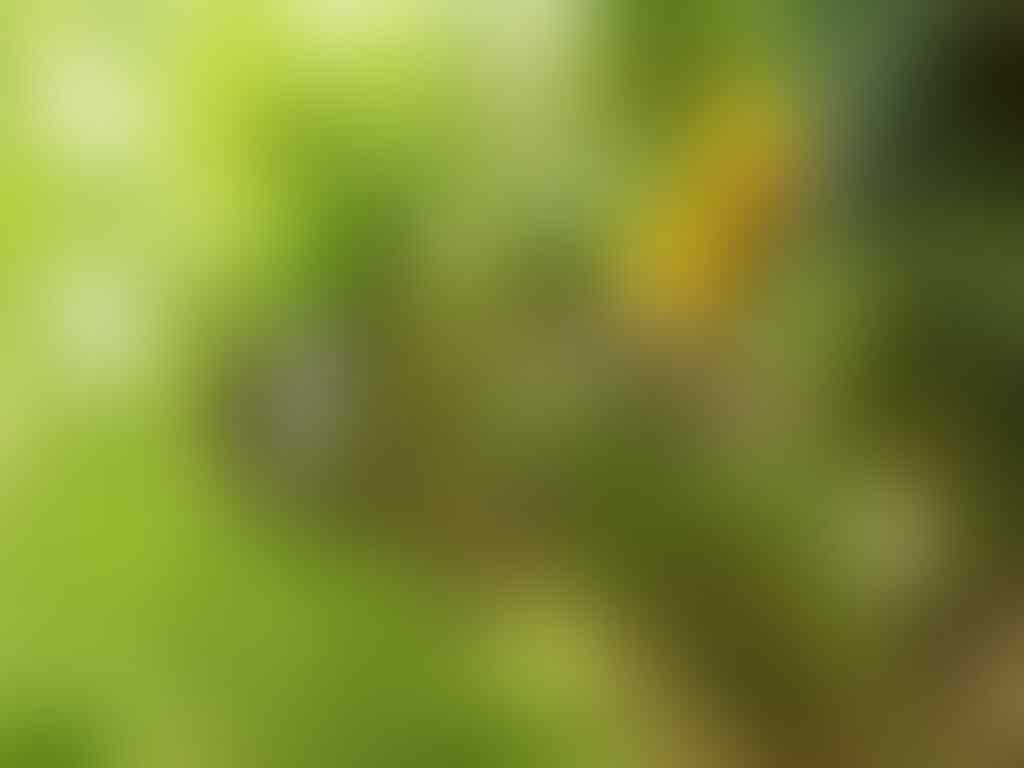 7 Hewan Paling Tembus Pandang, Ada yang 99%Transparant Lho Gan