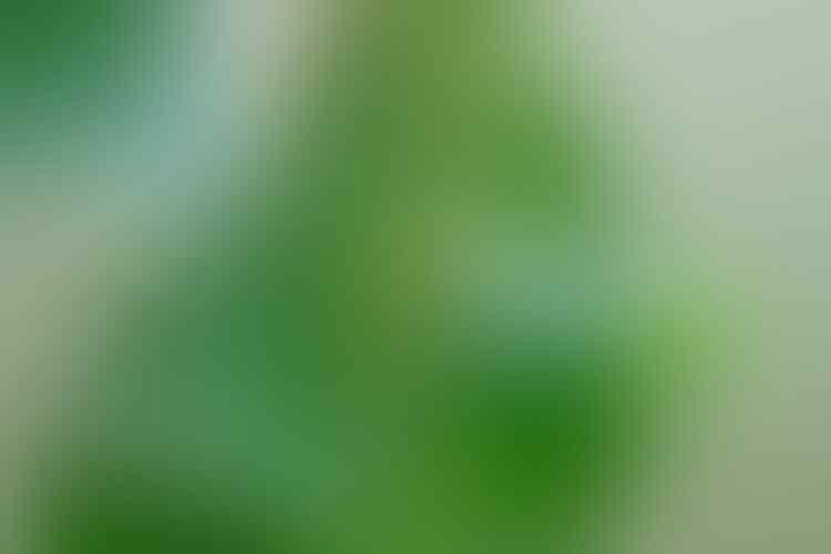 Amerika Serikat Kembangkan Tentara Serangga, Perlukah Khawatir ?