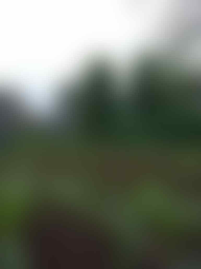 [Event COC] Tips Memulai Pertanian Organik #AslinyaLo