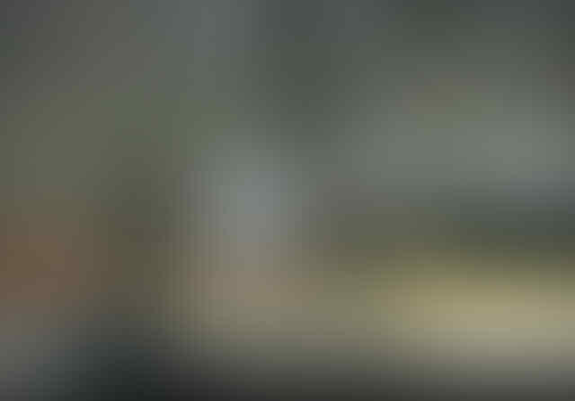Waduh! Kelelawar Disebut Bawa Ancaman Penyakit Baru di Indonesia