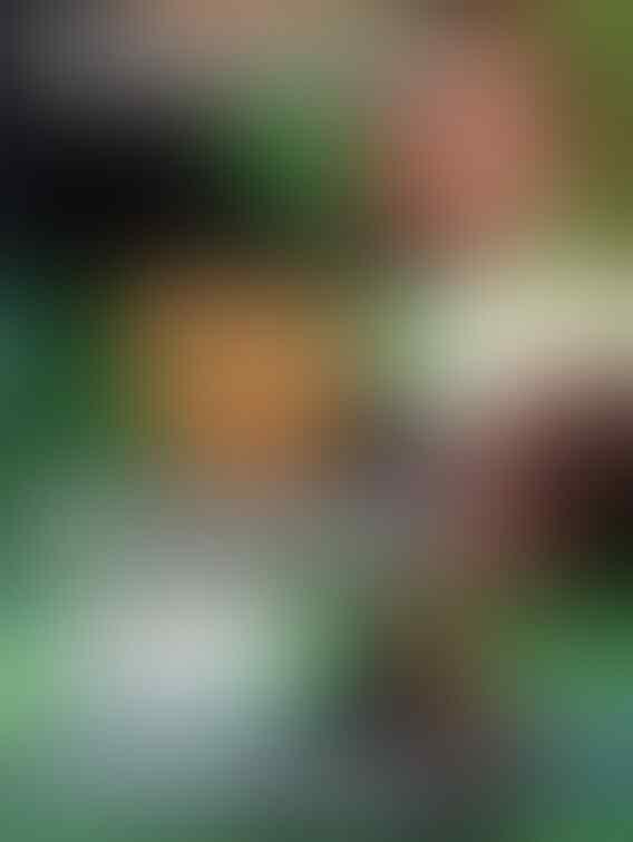 Fadli: Meninggalnya KPPS Memunculkan Spekulasi Disantet
