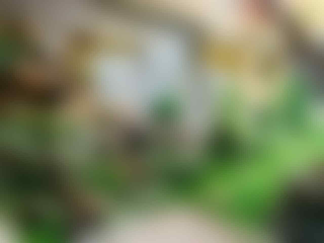 Forum Koi Kaskus Part 5 (Semua Tentang Koi Masuk Kesini)