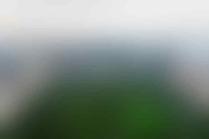 Anies Tanam Bugenvil untuk Atasi Polusi, Ampuhkah?