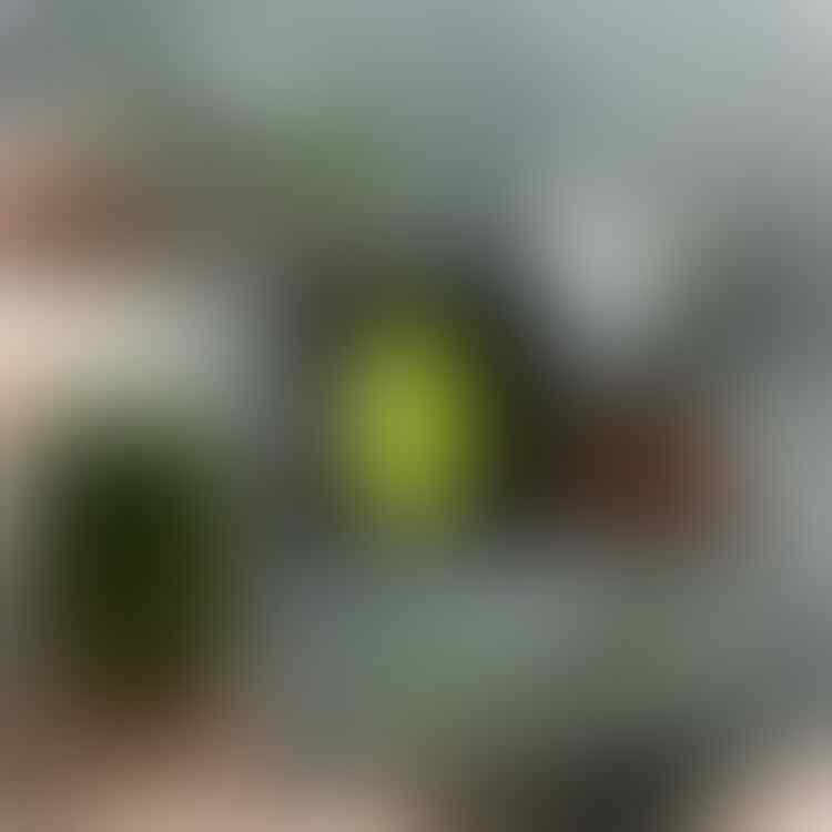 LELANG #371= 33pcs CLOSE JUM'AT 11/10 @22:12