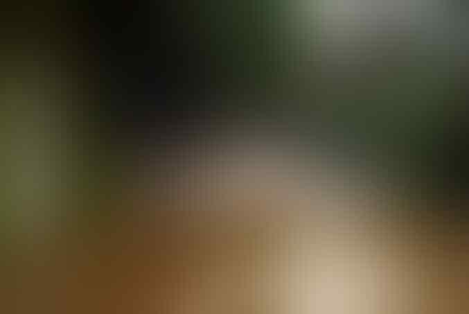 Tak Yakin RI Bebas Corona, AS Minta Terawan Lebih Serius