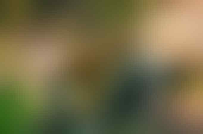 Foto Langka Harimau Jawa Dipublikasikan.