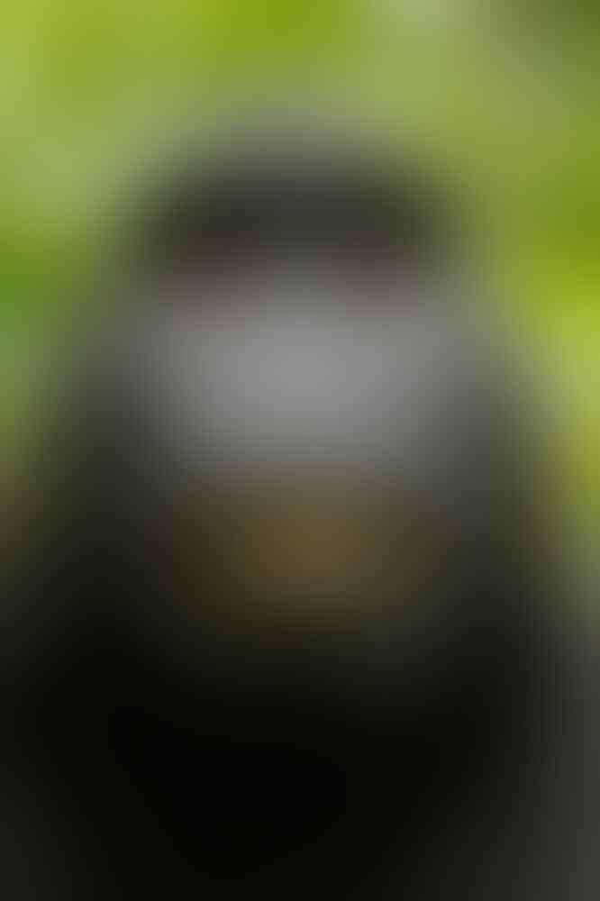 Kehabisan Miras, Monyet Pemabuk Serang 250 Warga dan Bunuh 1 Orang