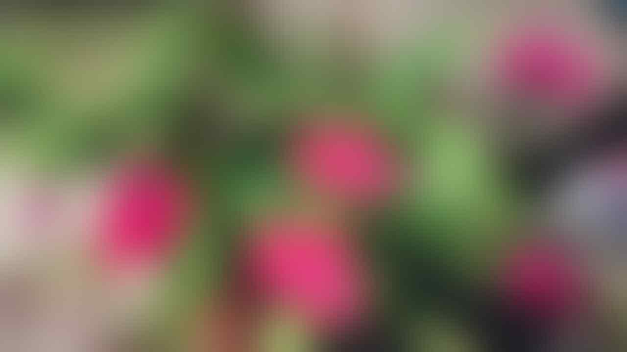 2020 Masih Ada yang Tanam Kaktus? Simak Nih Cara Perawatannya..