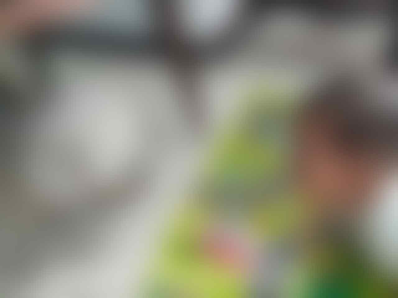 Hewan Peliharaan Yang Ramah Anak, yukkk Kasih Unjuk Di Reply Thread
