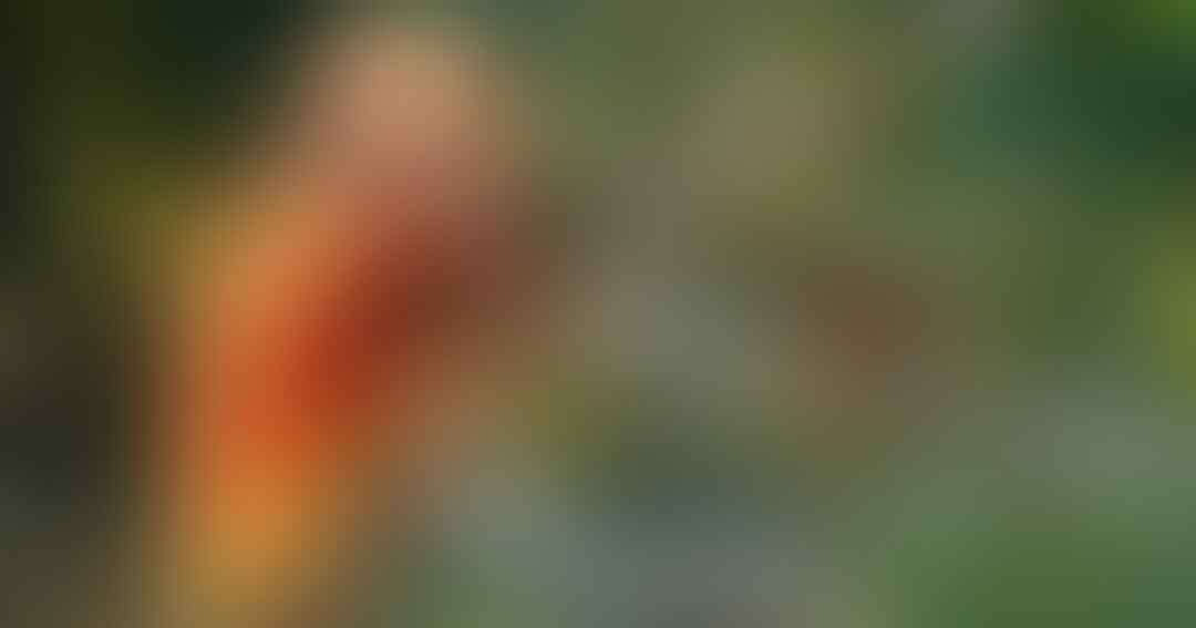 7-jenis-burung-cendrawasih-endemik-indonesia