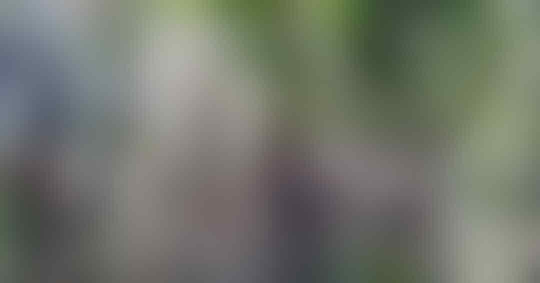 viral-dapat-order-mistis-motor-ojol-nyangkut-di-pohon-bambu-benar-gak-sih