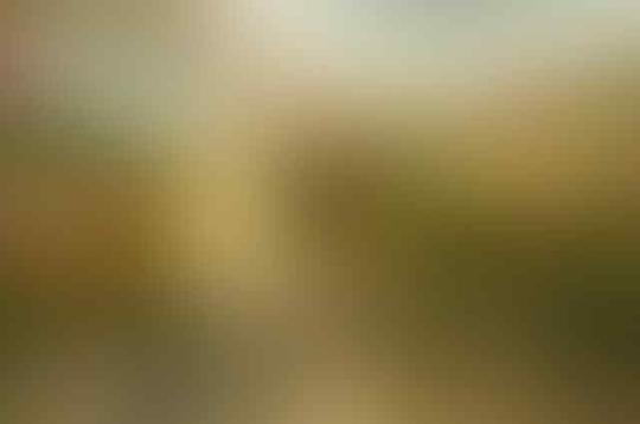 ORCHID SPA GADING SERPONG ,TANGERANG ( KAMPUS SEMESTER 2 ) - Part 2