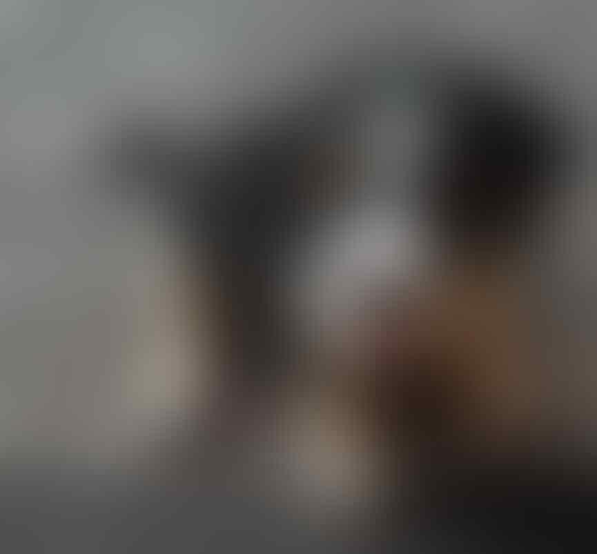 21+ Harga anak anjing beagle terupdate