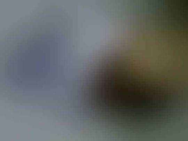 ★♣¤══¤۩۞۩ஜ PERDANA AXISPRO / AXIS PRO UNLIMITED ஜ۩۞۩¤══¤♣★