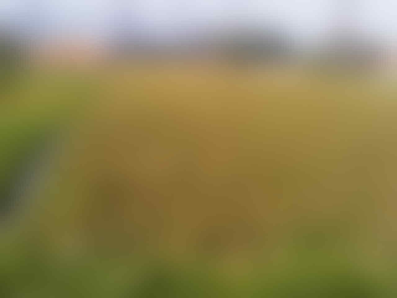 WTS Jual Tanah di daerah batujajar Bandung Barat