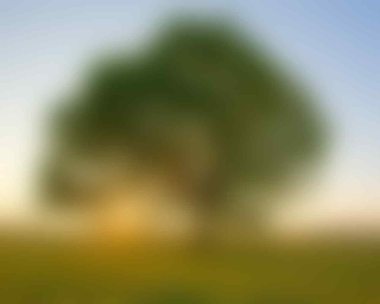Pohon Penyerap CO2 (Karbondioksida)