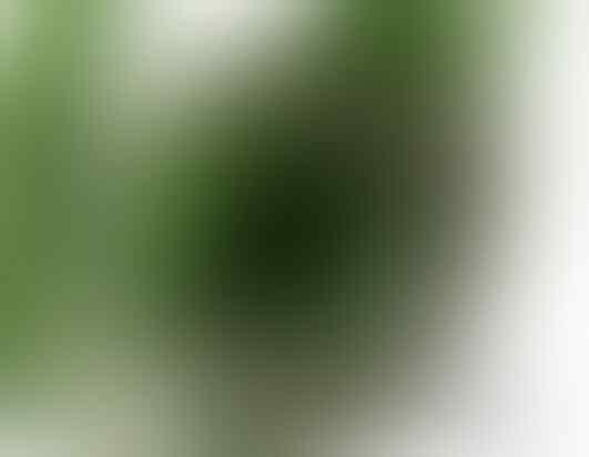 Gelang Pria Naga [Silver plated - Titanium Plated]