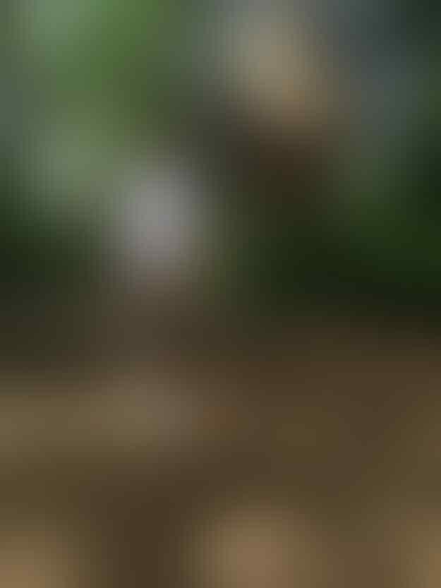 Bikin Gemes gan, Ini Dia 10 Tingkah Kucing Paling Konyol!