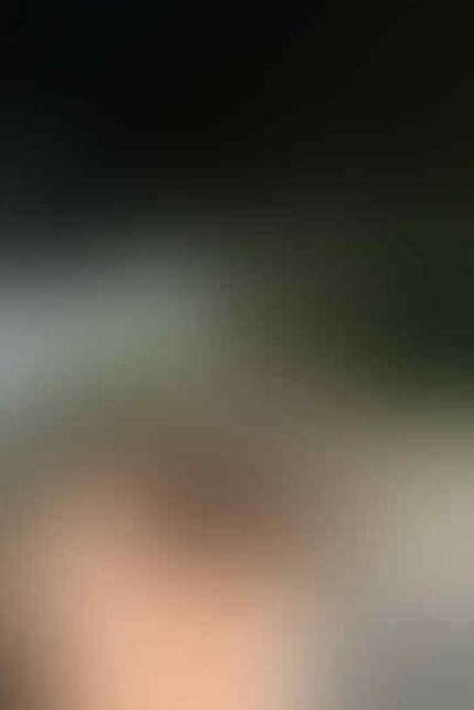 kitten persia pignose (Bandung)