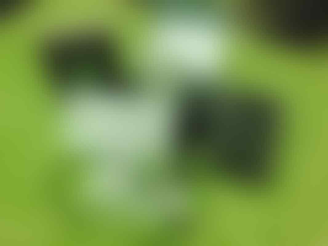 WTS LG Optimus 2X P990 Mulussss JOGJA MURAHHH...!!!!