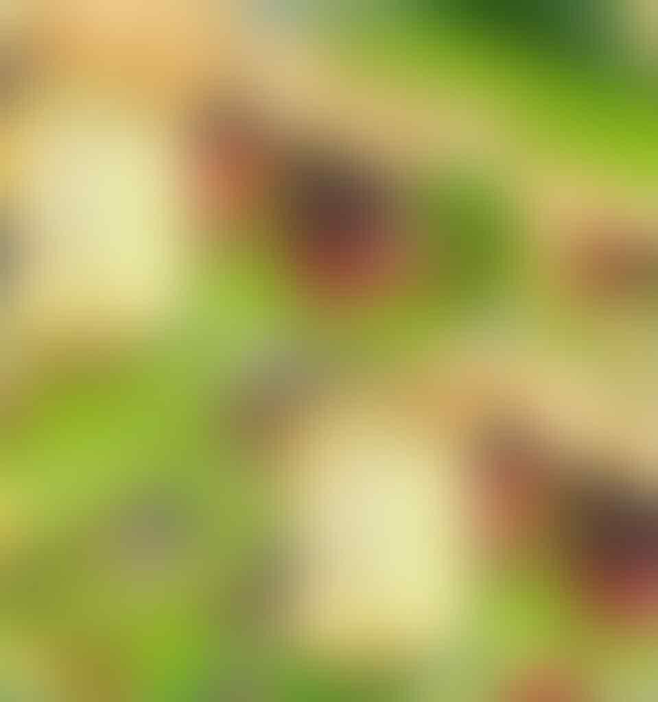 Gems Clash of Clans [iOS/Android] *Jaminan Update Harga sebagai yg Termurah*