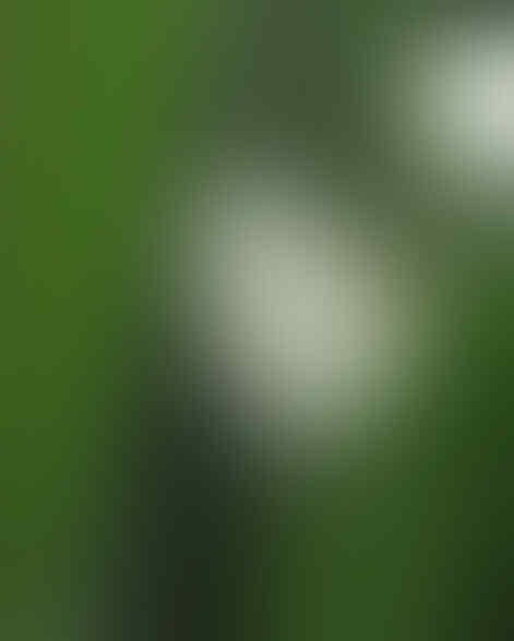 Jenis - Jenis Kategori Fotografi Bagi Pemula [Minat Fotografi Masuk++]
