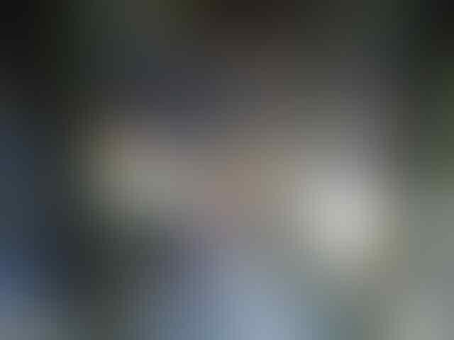 ★★★ YANG TANYA MASUK SINI (Semua Burung) ★★★