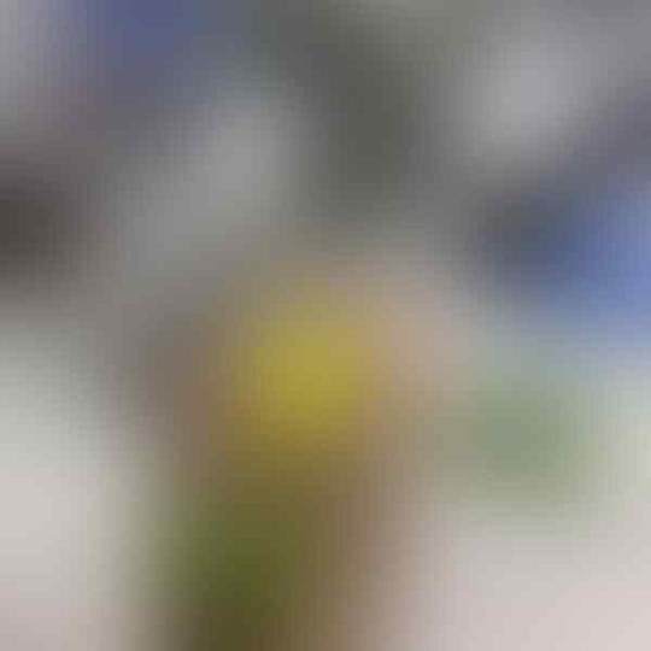 ROUGH BAHAN BATU AKIK DAN OBSIDIAN BANYAK - Masuk Gan Update