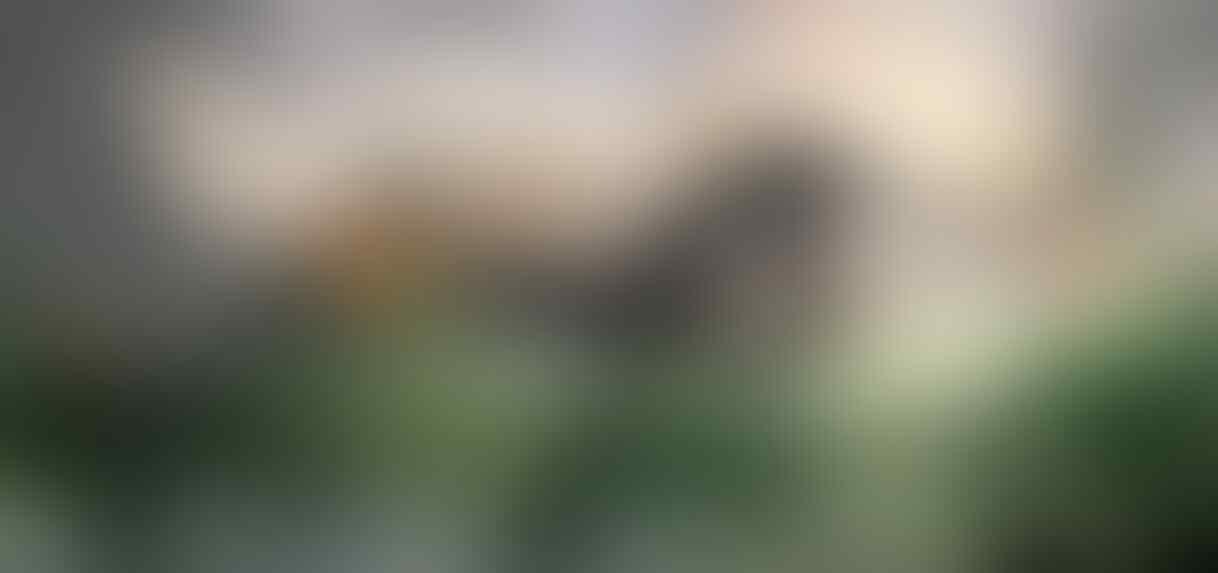 ▀▄▀▄ Lesehan Spirit, Konjurer & Khodam Berbagai Aliran ▄▀▄▀ - Part 1