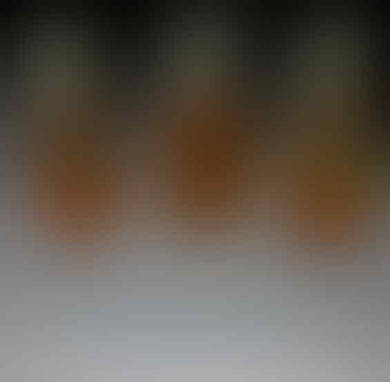 Bulu / Buluh Perindu (ASLI) Murah Pake Banget (Part 2)