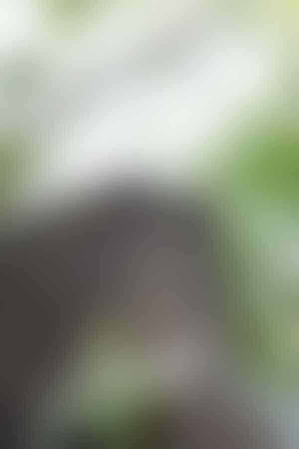 Nongkrong Bareng, Lensa 50mm (Normal Lens) - Part 1