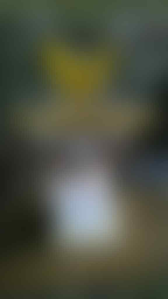 "[COLLECTOR ITEM - PICTURE AGATE] Natural CHALCEDONY LAFAZ ""Berprestasi"""