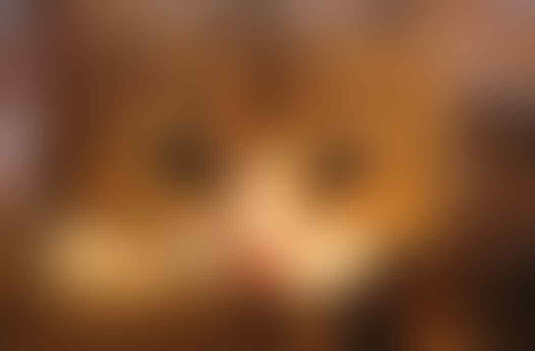 "Kucing Agan Sering Begini? Maksudnya ""Mpus"" Apa Sih"